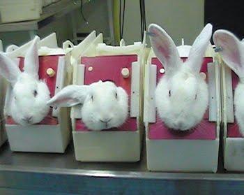 coelhos-teste-china-2